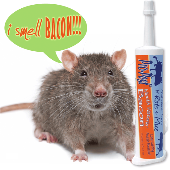 Picture of Pro-Pest Rat & Mouse Lure Bacon (32cc syringe)